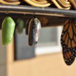 Agile Educational Leadership – ein Ansatz im Entstehungsprozess